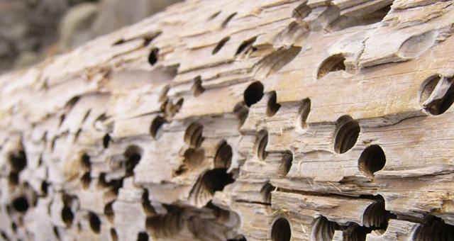 Faanyagvédelem az épületfán